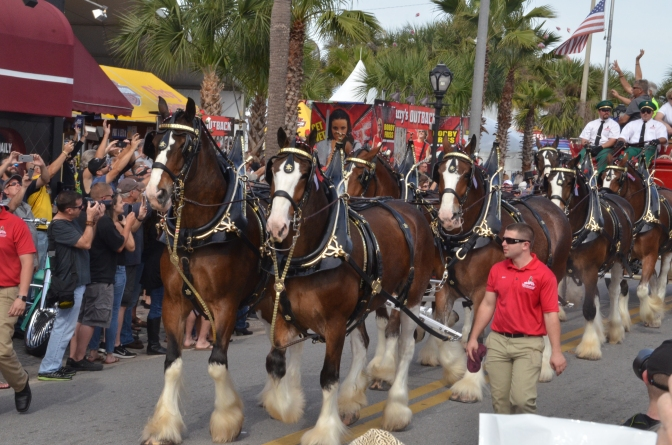 THE CLYDESDALES ON MAIN STREET IN DAYTONA, BEAUTIFUL CREATURES, THAT'S FOR SURE.