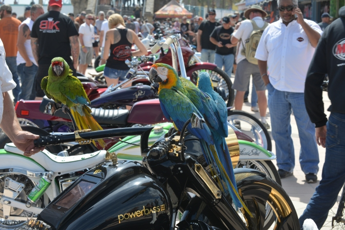 THE 2019 DAYTONA BOARDWALK MOTORCYCLE SHOW, BIKEWEEK STYLE